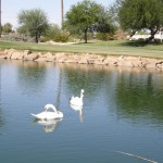 Sun City West Swans